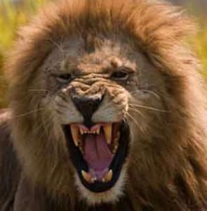 Rasta Seed Metaphysical Lion Babylon Rainbow