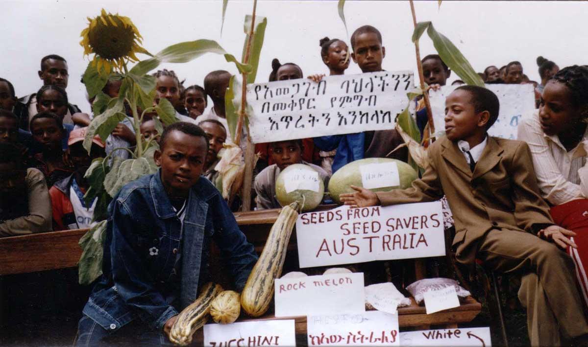 Ethiopian Seed Saving produces bumper crop Rastaseed.com