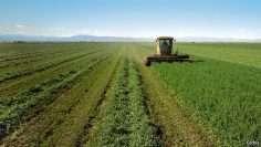 gmo crops say no