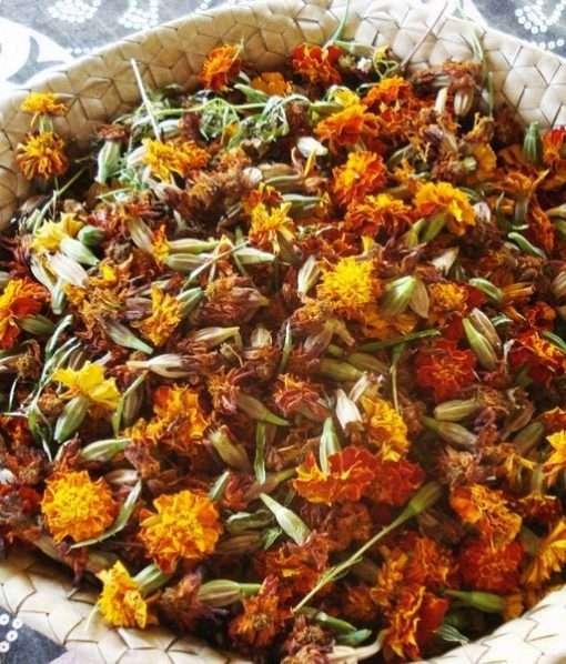 marigold seed heads
