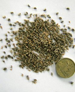 Parsley Seeds for sale